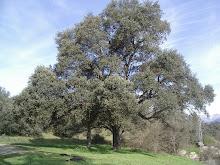 Mi amigo el árbol