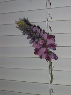 Kudzu flower stalk