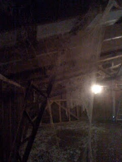 Chicken house cobwebs