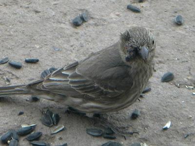 Bird Feeders Vinegar Bird Feedersbird Feeders