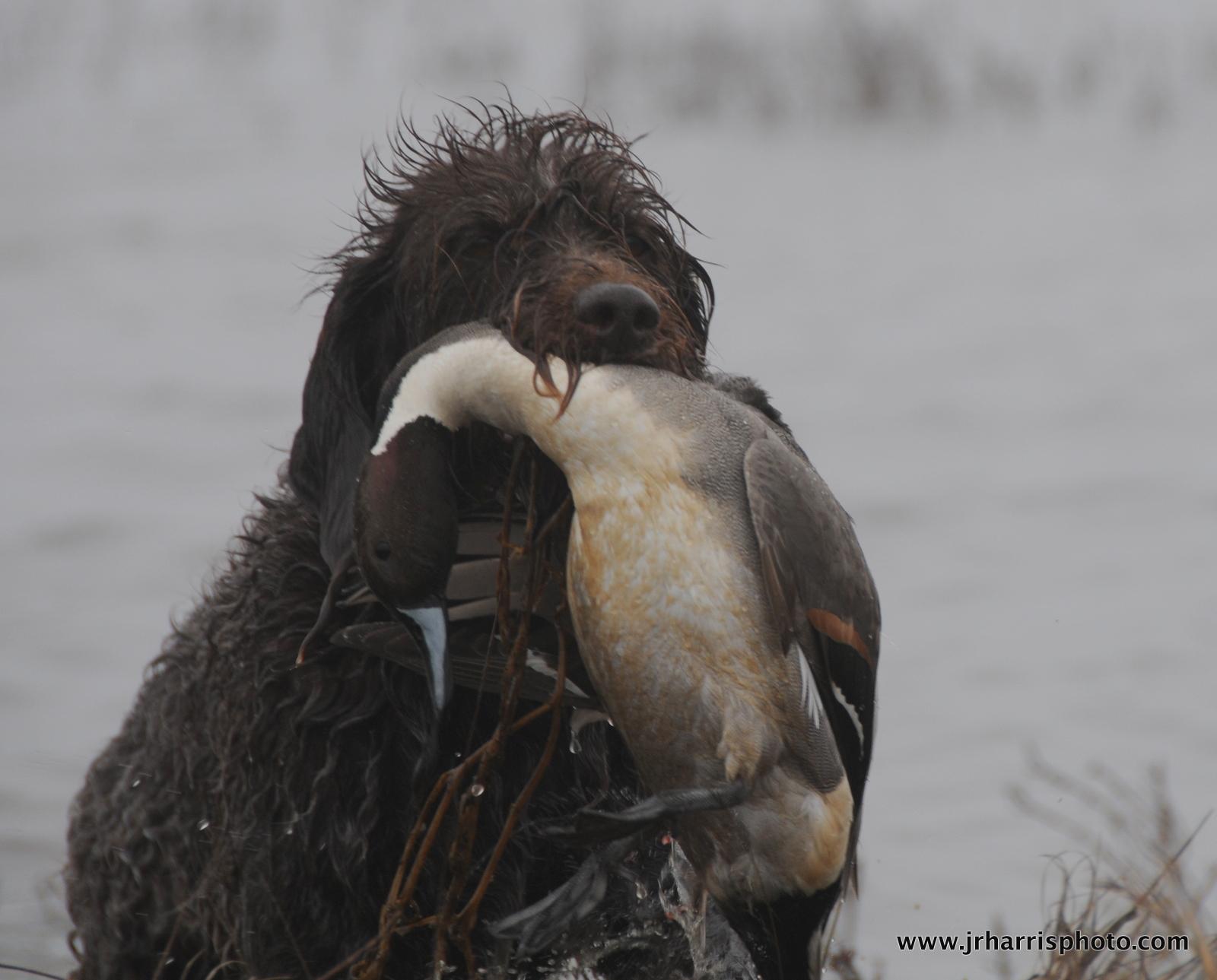 Jim R Harris Photography California Duck Hunting 2011