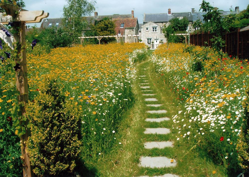 Bath garden design for Wild grass landscaping