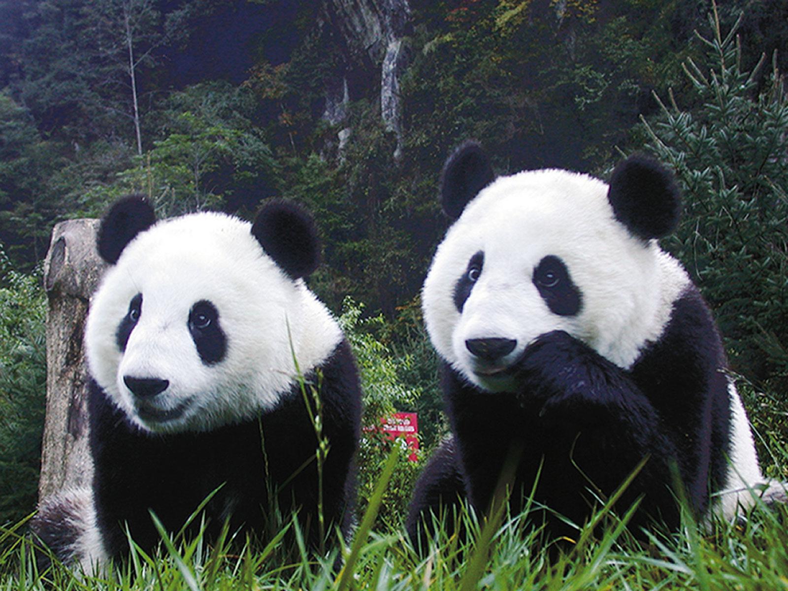 Las mejores Fotos de animales [nunca antes vistas] - Taringa!