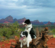 Sedona Hot Dogs