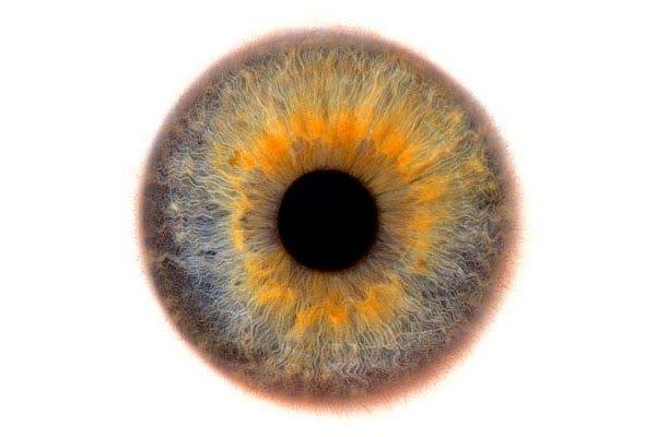 Imagenes del Ojo y Colores del Iris, la compleja Belleza