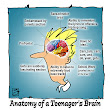 The Teenage Brain and Lesson Planning (521)