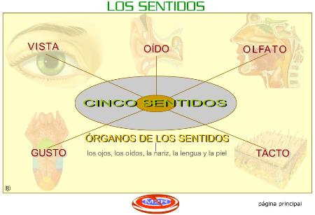 Anatomía Y Fisiología Humana Ii