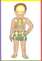 O Cantinho Da Partilha O Corpo Humano Em Imagens