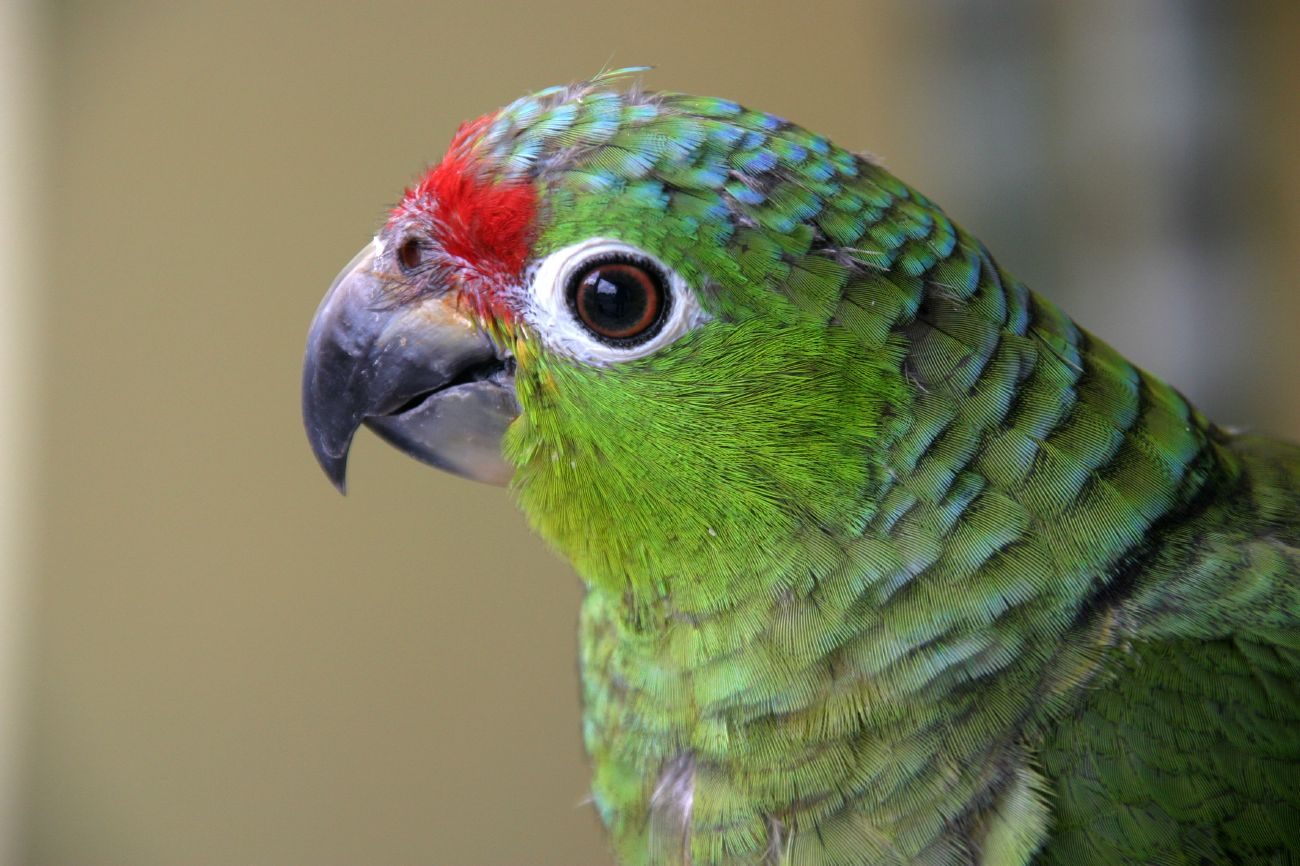 Costa Rica Country Animal