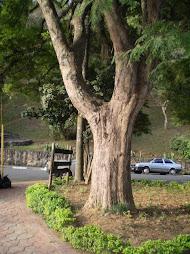 Quando olho uma árvore...me perco nela!