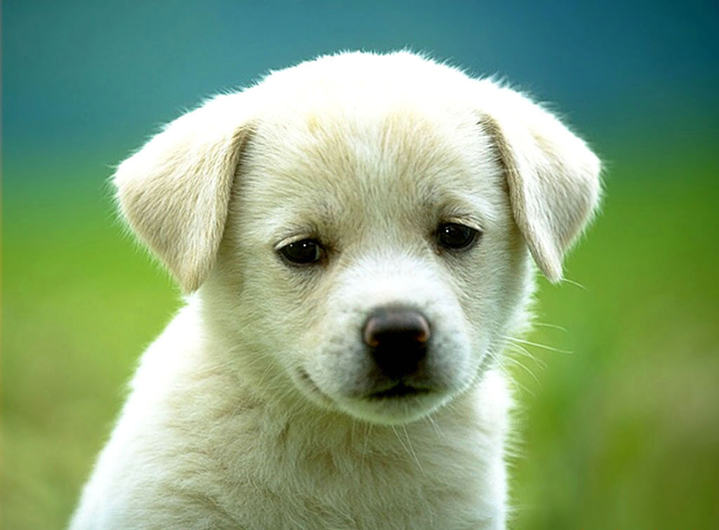 http://1.bp.blogspot.com/_iSqbtieR1bk/TH4xk4NRJVI/AAAAAAAAACc/QJWAbtqble4/s1600/perro-cahorro.jpg