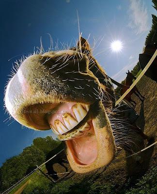 مضحكه Crazy_Pictures-a02.j