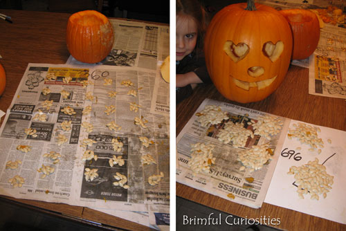 Brimful Curiosities Life Cycle Of A Pumpkin How Many Seeds In