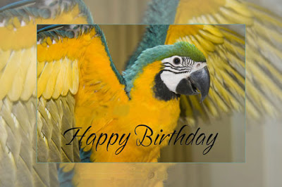 birthday cards talking birthday cards ideas, Birthday card