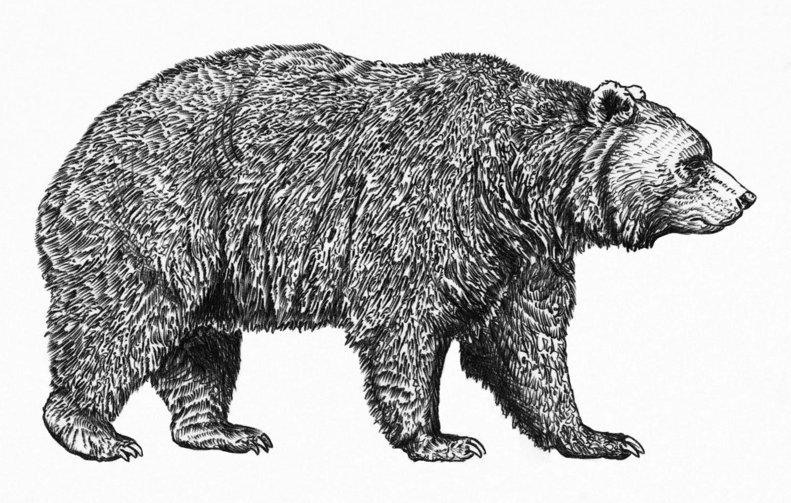 brown bear diagram of human teeth numbering charts black illustration