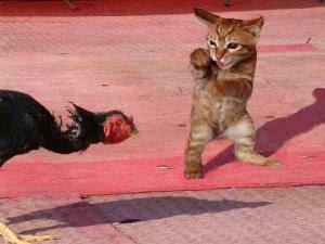 katt bild  katt bilder  kattbilder