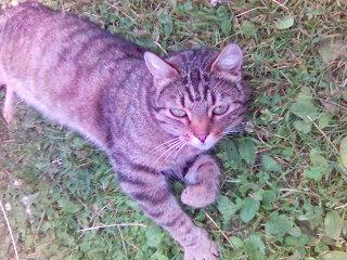 katt bild