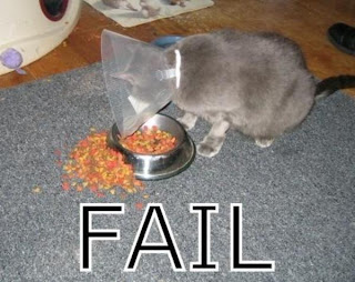 kattbilder