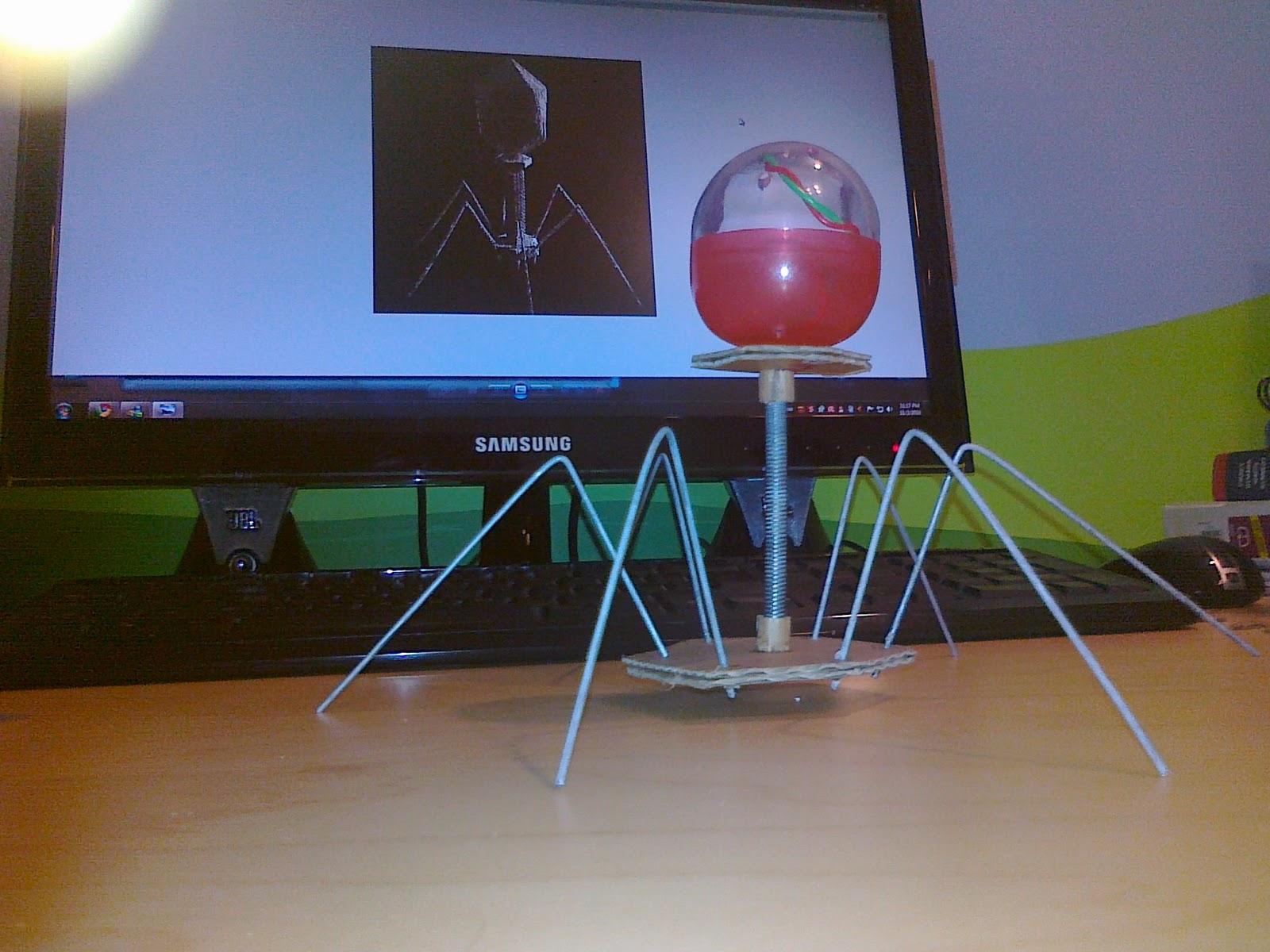 Bird Nest: Bacteriophage model