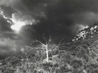O PESSIMISMO NACIONAL Dead+tree3
