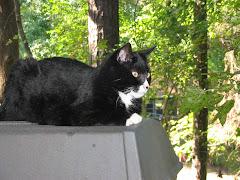 The BooCat's Cat