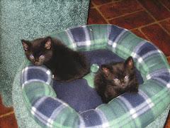 The BooCat's New Cats