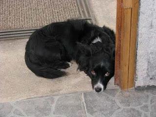 cute small black dog