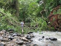 fallen tree in Rio Viejo, Puriscal