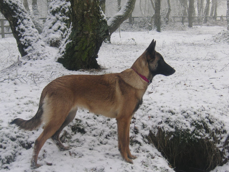 Ruby in the snow