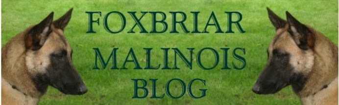 Foxbriar Malinois