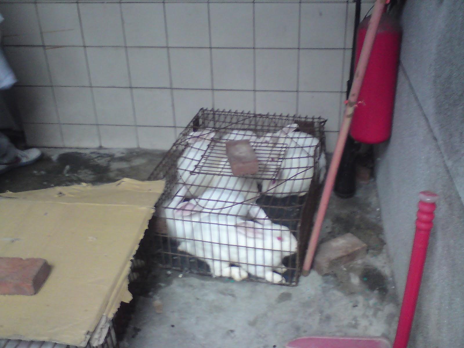 OAO: 實驗動物基本概念