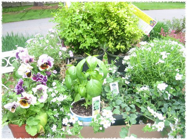 [plants-08.jpg]
