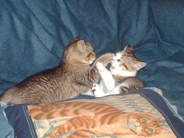 [kittens7wks+004.jpg]