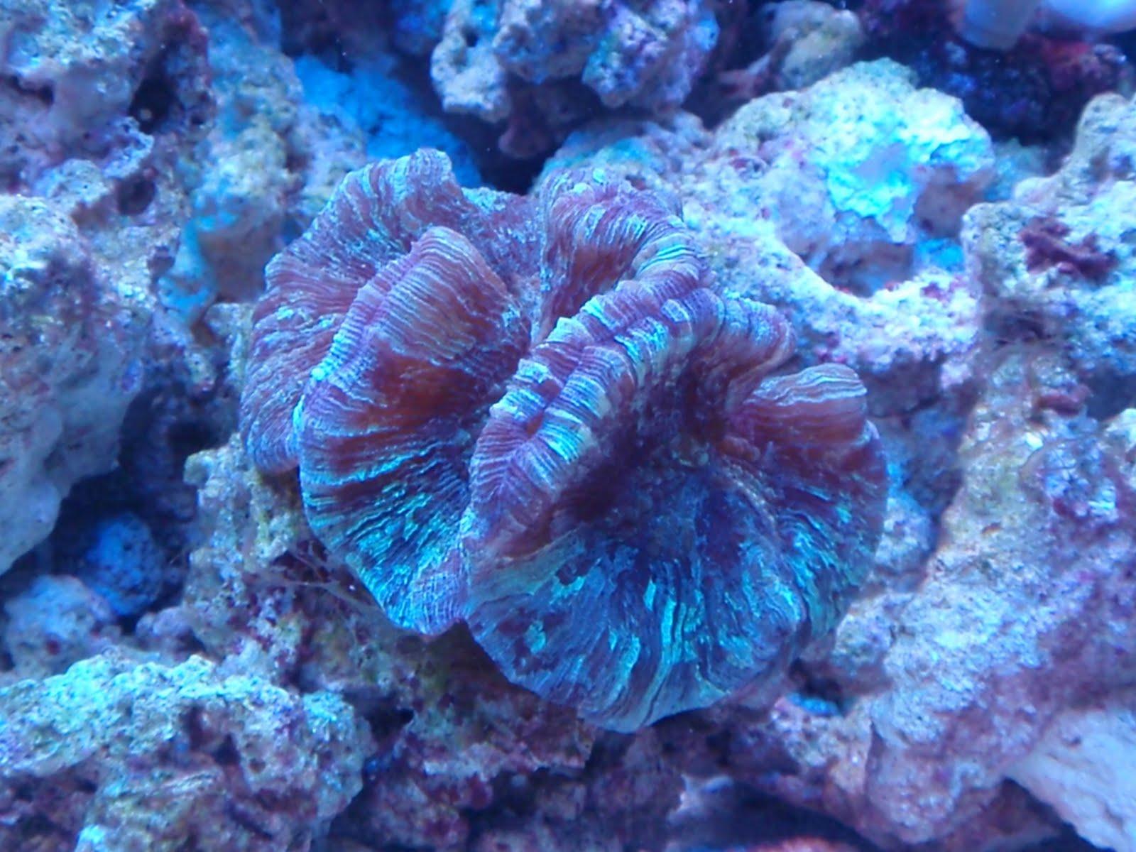 Trials and Tribulations of a Reef Aquarium: Venturing into ...