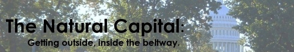 The Natural Capital - find us now at TheNaturalCapital.com