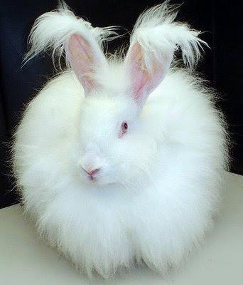 Interesting Rabbit Facts | Kingsbrook Animal Hospital's Blog