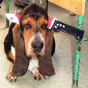 [Image: angry+bloodhound.jpg]