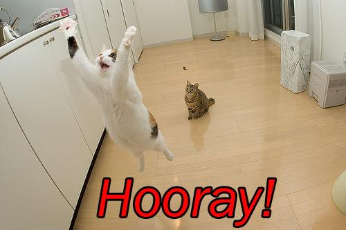 [cat-saying-hooray.jpg]