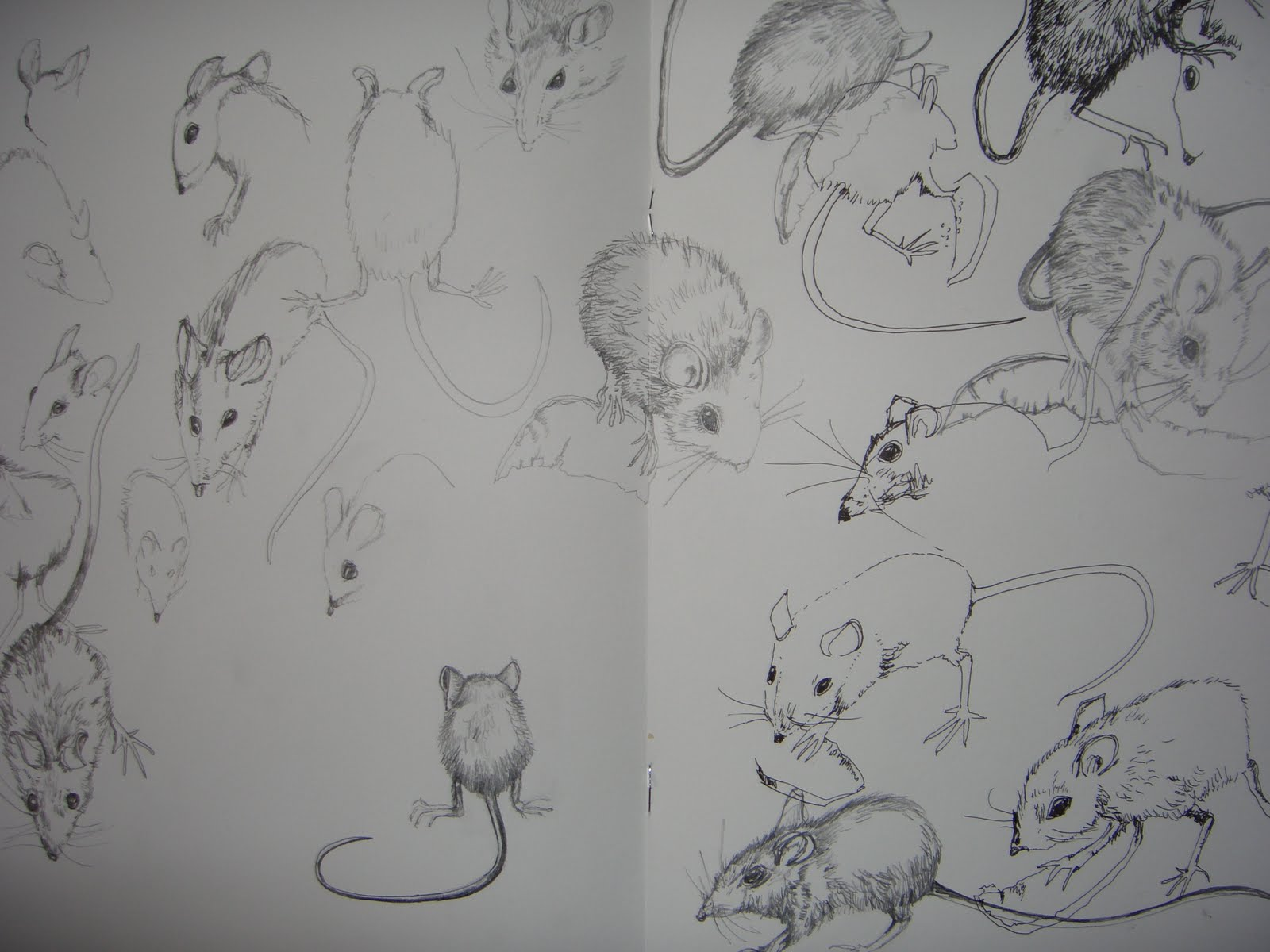 Line Drawing Mouse : Drawings from nature: the mouse in house