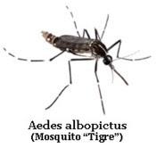 tipos de mosquitos