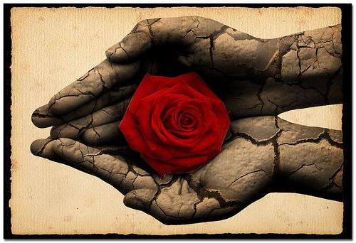 [Hands-Rose]