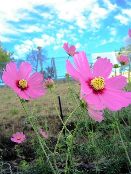 par de flores