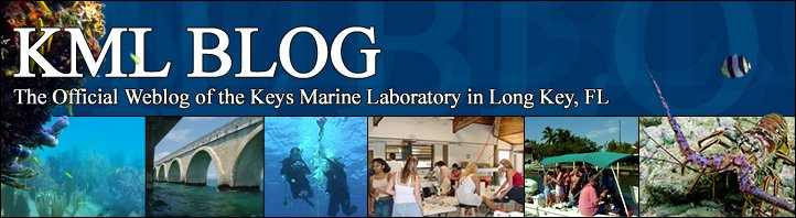 Keys Marine Laboratory Blog