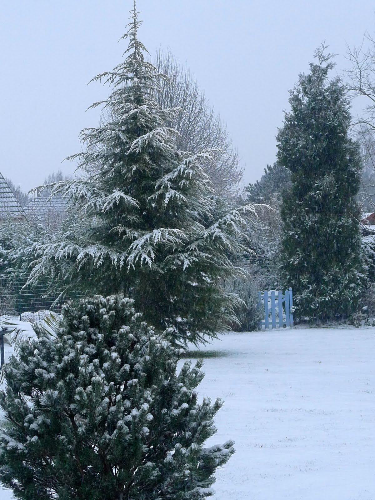 Que Faire Au Jardin En Janvier que faire ce mois dans mon jardin annetois ?: que faire en