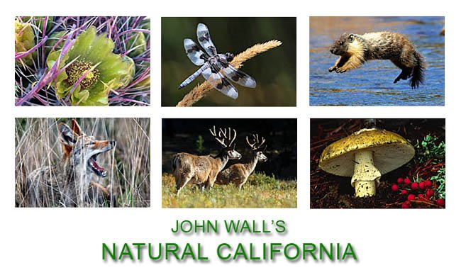 John Wall\