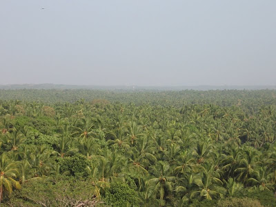 Coconut trees at Bekal