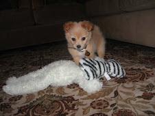 My Puppy, Cooper