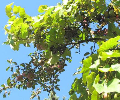 Northview Diary The Fruit Salad Tree