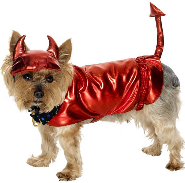 Dog Halloween Costumes   Picture Record