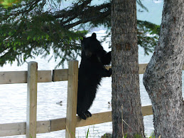 Bear at Cameron Lake